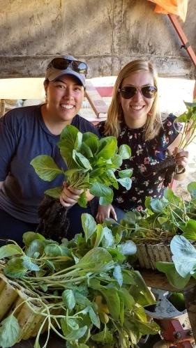 Planting Cabbage.jpg